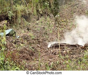 Charcoal burning in the rainforest, - clearing for slash and...