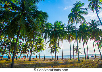 An image of two nice palm trees in the blue sunny sky.Mui...