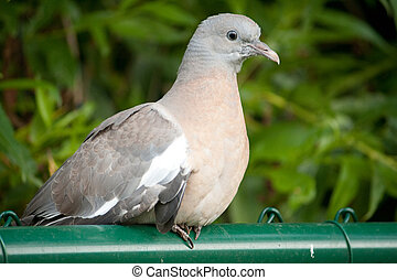 pigeon sitting on a hostelry
