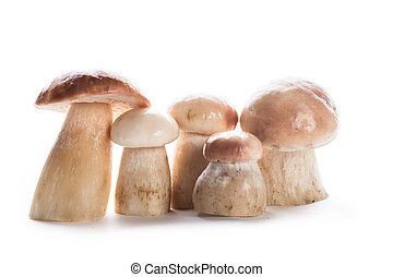 The ceps isolated - Group of fresh ceps isolated on white...