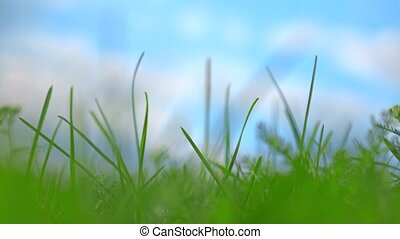 Close up 4K long shot of green grass against cloudy sky....