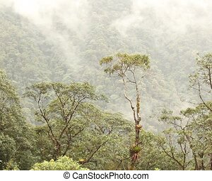 Bromeliad laden tree in cloudforest - In the Ecuadorian...