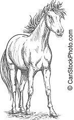Racehorse stallion sketch for equine sport design -...
