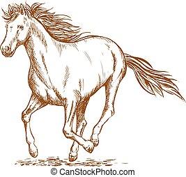 Brown horse sketch of arabian mare - Brown horse sketch of...