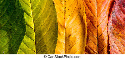 Autumn composition, colorful leaves in a row. Studio shot. -...
