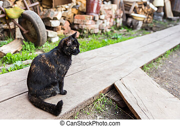 beautiful black cat - black cat sits and stares in the...