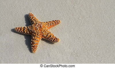 Starfish Touched By Wave - Starfish laying on the sand is...