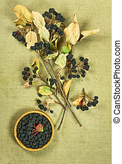Chokeberry, aroniaDried herbs Herbal medicine, phytotherapy...