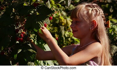 Raspberry Bush Red - Girl vomits and eats raspberries from...