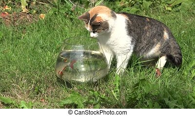 Tabby cat catching fish upset glass aquarium and water flow...