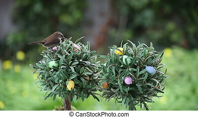 wren on Easter tree - a wren looks for food in a small tree...
