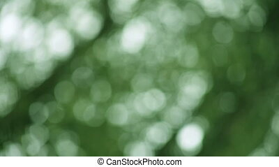 green defocused leaves background - dark green background of...