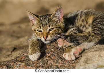 observe young small cat - observe young small wild cat....