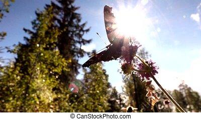 butterfly in slow motion