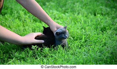 Children stroking two kittens outside - A Children stroking...
