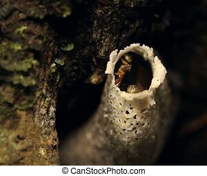 Amazonian sweat bees at entrance of - In tropical...