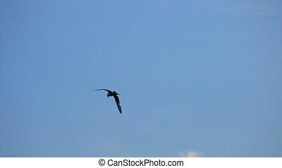Seagull flies high at sunset in summer - Seagull flies high...