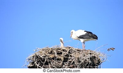 Two storks in nest on background of blue sky. One stork is...