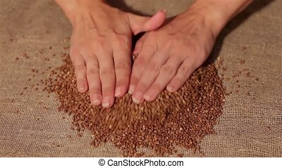 Buckwheat smooth out on burlap harvesting smooth out hands...