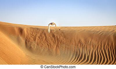 Desert Eagle Owl flying over dunes of Dubai Desert...
