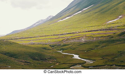 Huge Flock of Sheep Grazing on a Mountain Pasture. Huge...