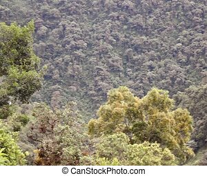 Pan to a clearing in montane rainfo - Note landslide at...