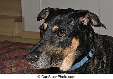 My beautiful dog Kim - A close up of my beautiful female pet...