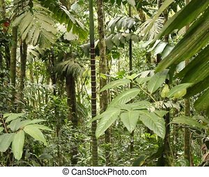 Interior of tropical rainforest - In the Upper Amazon,...