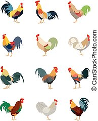 Colorful set of various roosters, cartoon style vector...