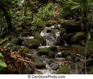 Rainforest stream