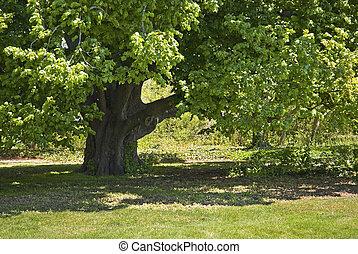Shady Oak - An old shady oak tree is part of the landscape...