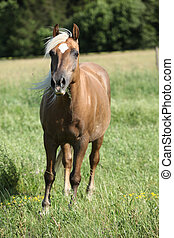 Nice palomino on pasturage - Nice horse with blond hair...