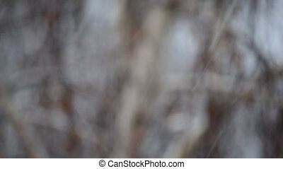 Slanting snow falling on grey and white blurred background -...
