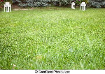 Grass field - Fresh grass field