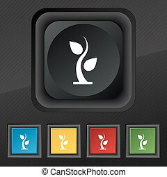 sprout icon symbol. Set of five colorful, stylish buttons on black texture for your design. Vector