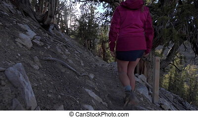 Hiking Methuselah Trail loop - Hiker Tourist on Methuselah...