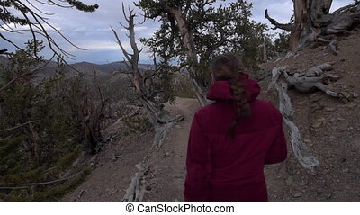 Hiking Methuselah Trail loop