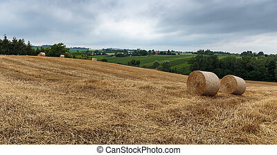 Agricultural field with straw bales after harvest