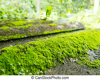 Natural green moss texture on tile roof with green nature in background (selective focus)