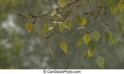 Autumn trees. First snow. leaves on a wind