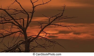 the tree on the mountain top - decline, tree, sky and...