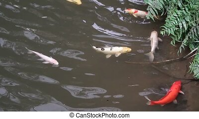 fish swim in the pond and hide under a waterfall