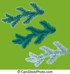 A set of blue spruce branches. Christmas tree - a symbol. The branches of spruce in frost. Vector illustration