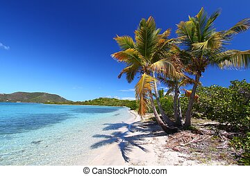 Beef Island Beach BVI - Palm trees on the beach of Beef...