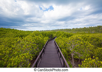 walkway in forest - walkway through the treetops in a rain...