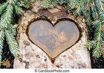 Close-up of carved heart in coniferous tree - Hearted pool...