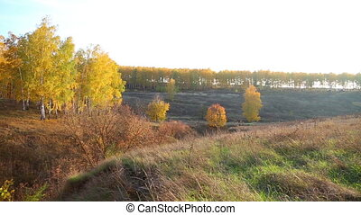 Panoramic view of autumn landscape with golden birch and...