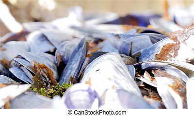 Pan shells eaten blue mussels