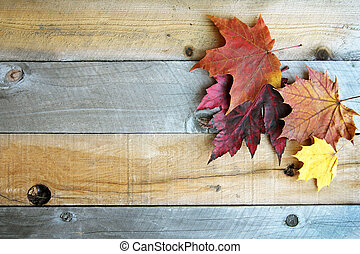 Autumn Sugar Maple Leaves Framing Rustic Wood Background -...