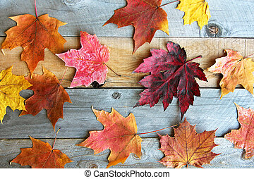 Group of Colorful Fall Maple Leaves on Wood Background - A...